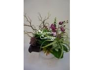 succulents in white round vase